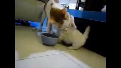反撃する猫