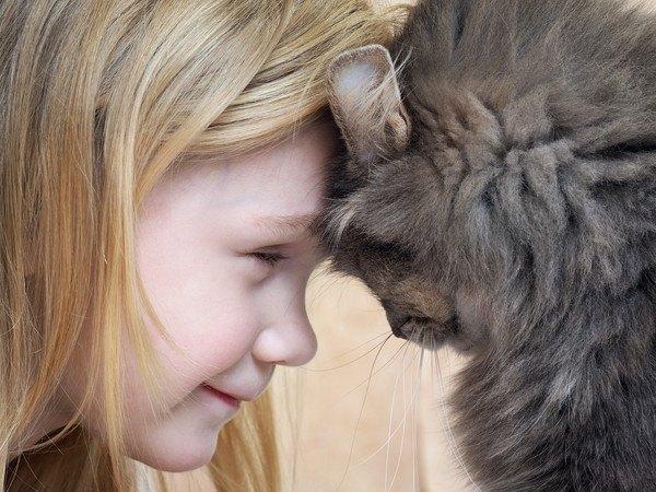 子供と頭を合わせる猫