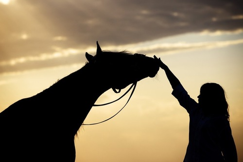 馬をなでる人