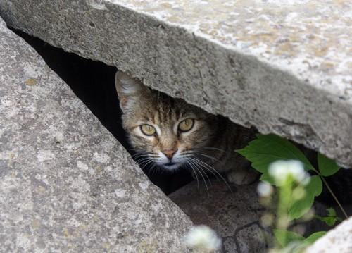 物陰に潜む猫