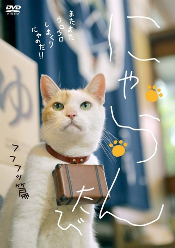 にゃらんの猫