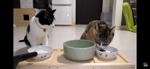 食べ終わって隣の猫を見つめる猫