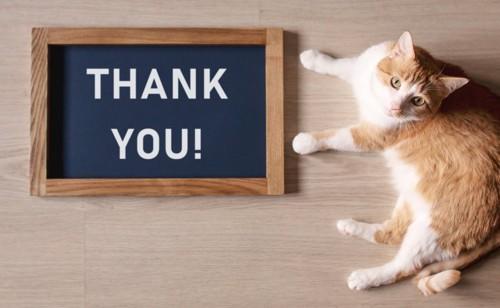 感謝する猫