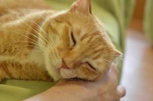 ホームのソファで寝ている猫のトラノスケくん