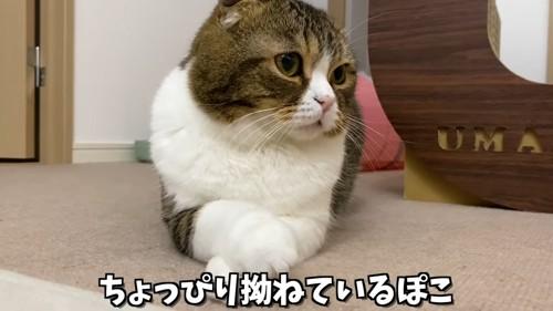 前足を重ねる猫