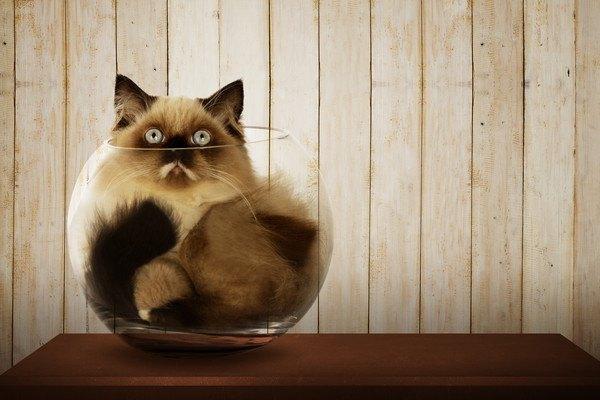 ガラスのボウルにすっぽりおさまり上を見上げる猫