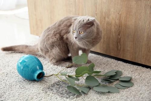 倒れた花瓶の横にいる猫