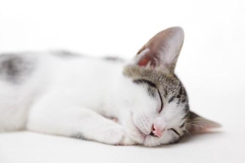 気持ちよく眠る猫