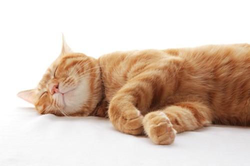 横になって眠る茶色の猫