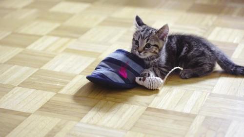 スリッパとねずみのおもちゃと猫