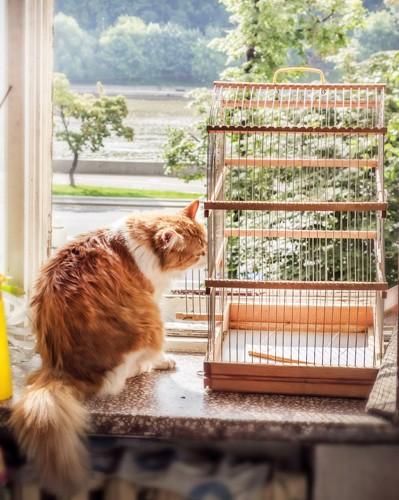 ケージを見る猫