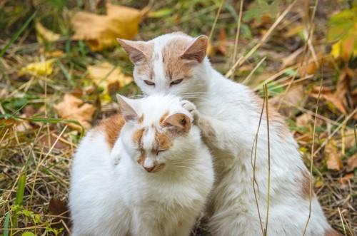 首を噛まれる猫
