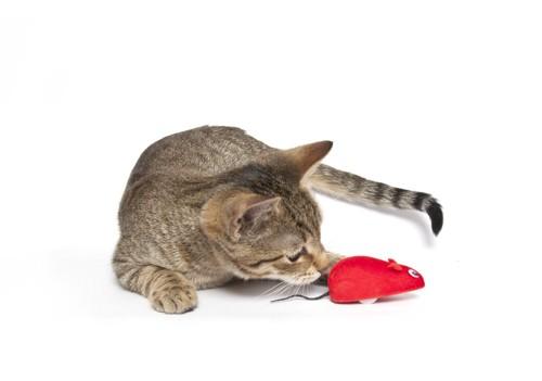 ネズミのおもちゃの匂いを嗅ぐ猫