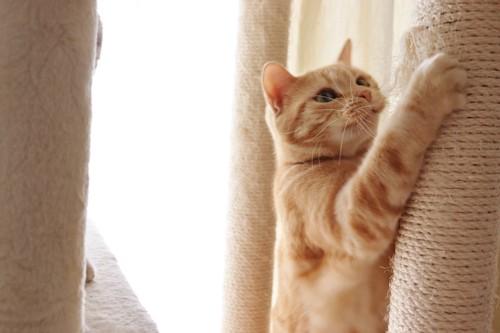 キャットタワーの柱で爪を研ぐ猫