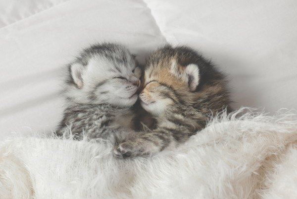 子猫二匹で眠る