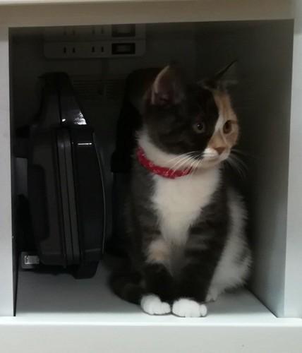 扉の中に居る猫