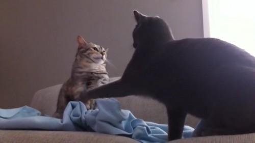 起こされた猫