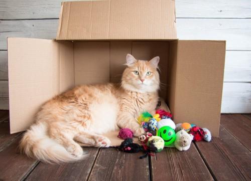 横にしたダンボール箱に入っている猫とたくさんのおもちゃ