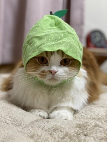 被り物を被る猫