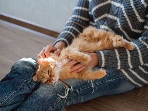 体をこすりつける猫