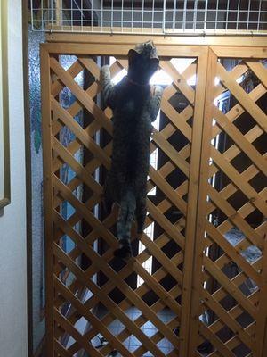 猫が上を見ている