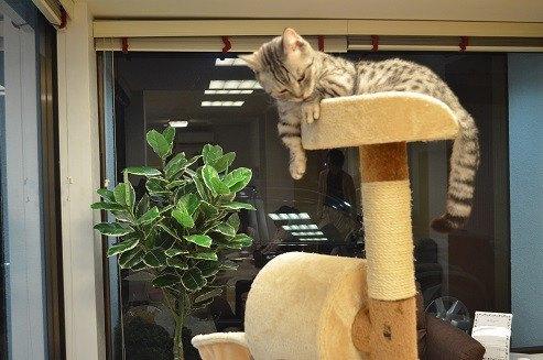 猫とお茶の店内の様子