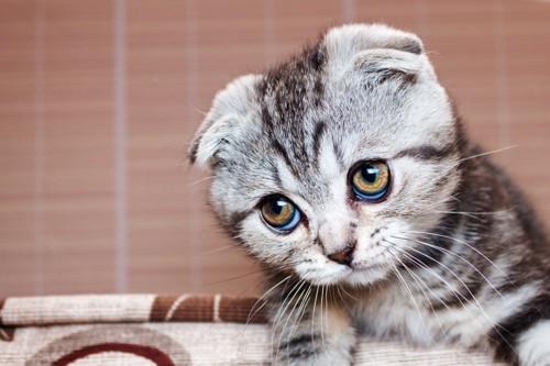 疑いのまなざしの猫