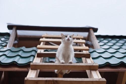 家にかけられたはしごにいる猫