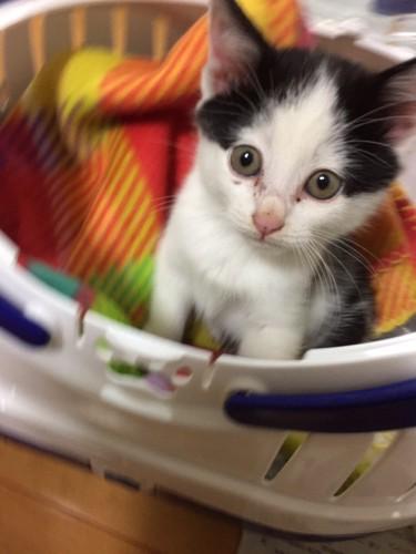 キャリーに入った子猫