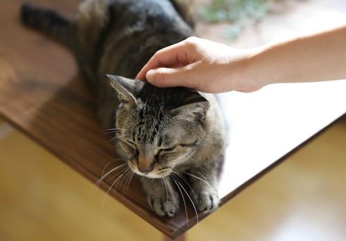 頭を撫でられてリラックスしているキジトラ猫
