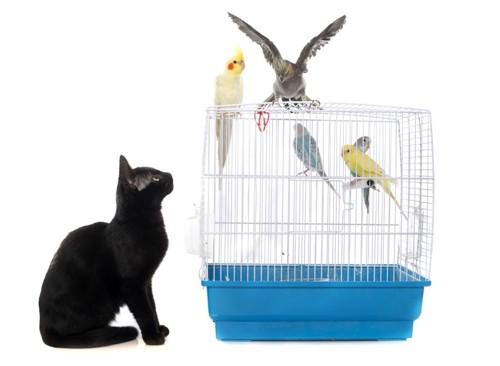 鳥かごを見つめる黒猫