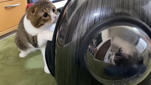 キャリーに前足をかける猫