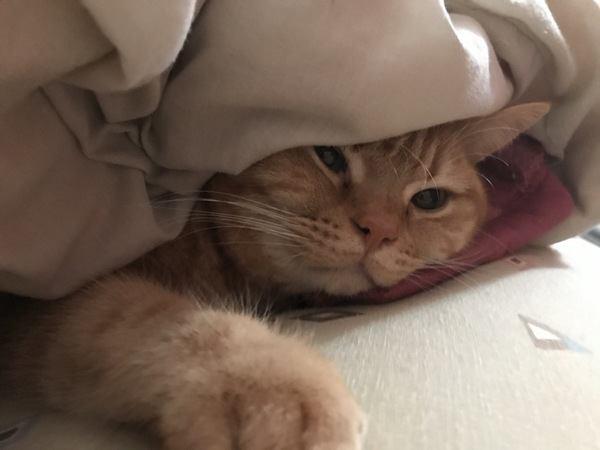 布団で寝るザンギくん