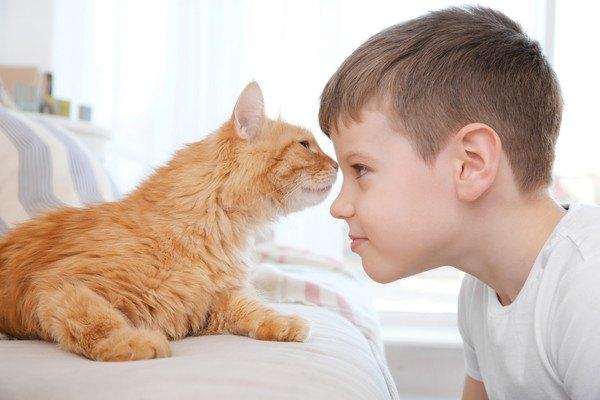 子供の頭にキスをする猫