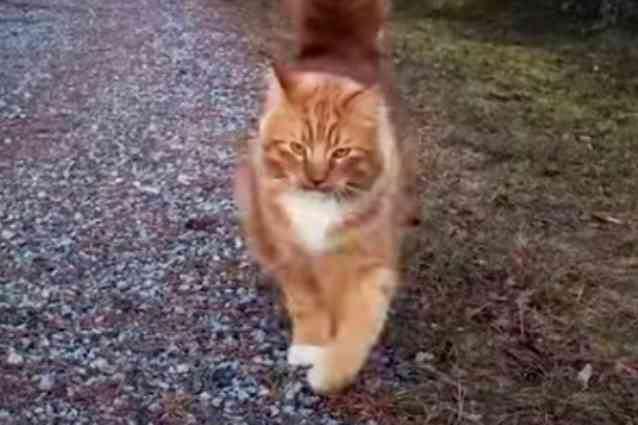 足元に来た猫