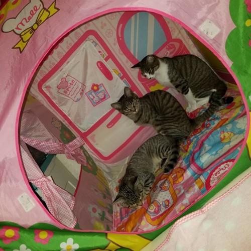 子供用テントに入る3匹の猫