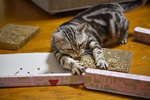 爪とぎをボロボロにして散らかす猫