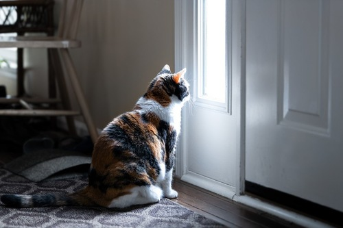 玄関のドアの前に座る猫