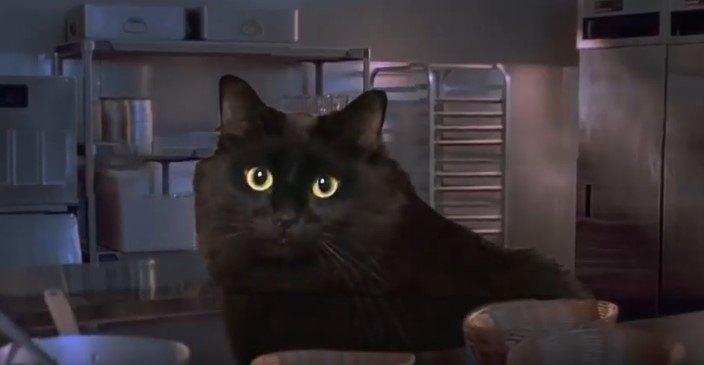 頭を出したアウル・キティ