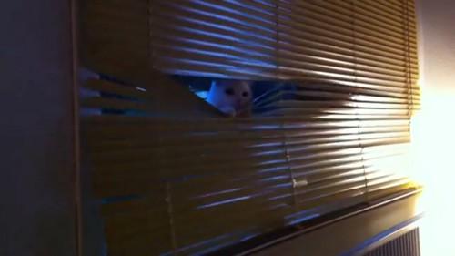猫が現れる