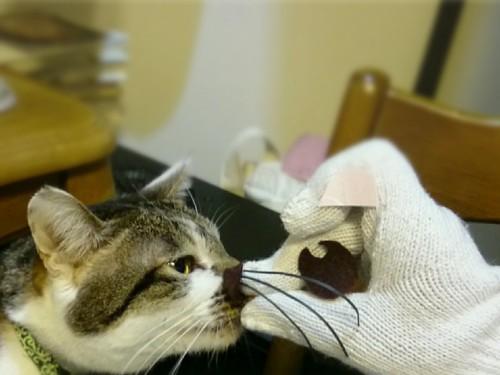 チュウする猫
