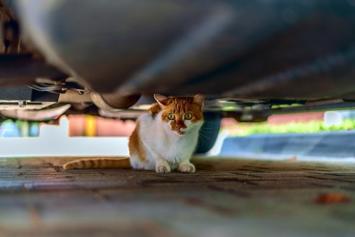 車の下に逃げ込む猫
