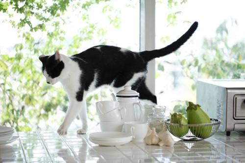 キッチンの台の上を歩く猫