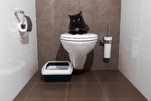トイレのフタで休む黒猫