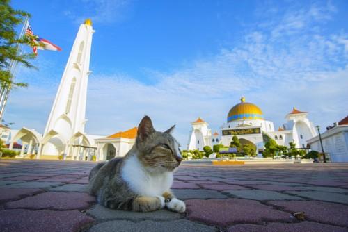 モスクの前にいる猫
