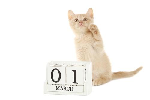 片手を上げる子猫とカレンダー