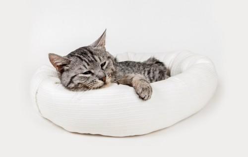 猫ベッドでまどろむ猫