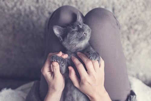 猫の脚に触れる
