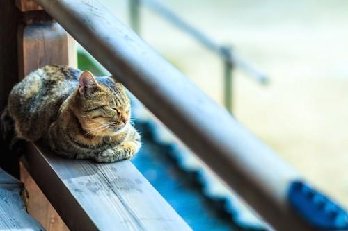 ベランダでお昼寝をする猫
