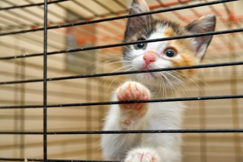 ケージに入って外を見つめる子猫